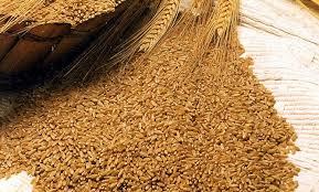 Характеристика и отличия пшеницы