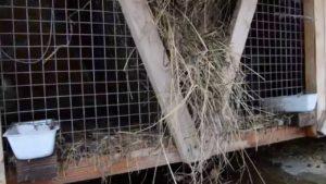 Новые технологии в содержании и разведении кроликов | Усадьба фермера