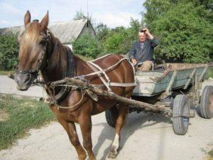 Использование лошадей в сельском хозяйстве