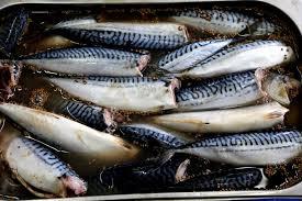 Технологии длительного хранения рыбы | Усадьба фермера