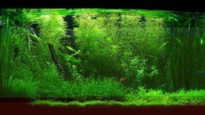 Как создать в аквариуме биотоп? | Усадьба фермера