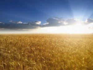 Основные методы агрохимии | Усадьба фермера