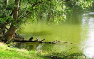 Что можно выращивать на арендованном пруду?