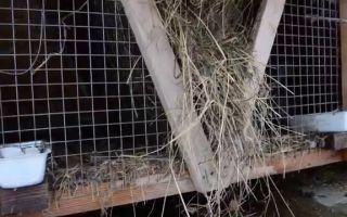Новые технологии в содержании кроликов