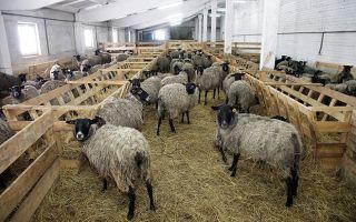 Выгодно ли держать овец