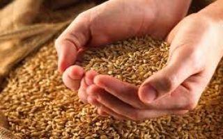 Оборудование для первичной переработки зерновых