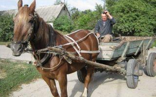 Применение лошадей в фермерском хозяйстве