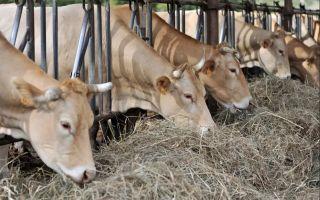 Сколько сена нужно корове?