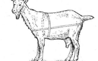Как определить вес козы?