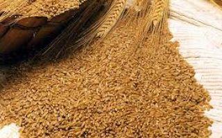 Характеристика и отличия пшеницы: яровая, озимая, твердая, мягкая
