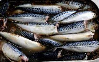 Технологии длительного хранения рыбы