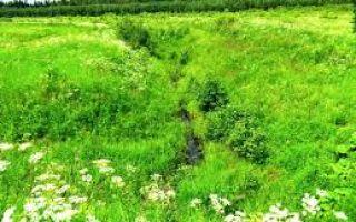 Сельскохозяйственная мелиорация