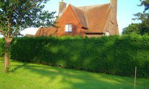 Живые изгороди украсят и защитят любой дачный участок