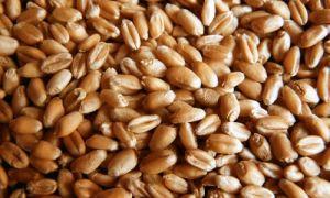 Состав и свойства зерновых масс