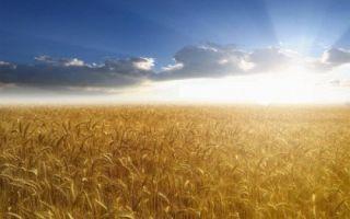 Основные методы агрохимии