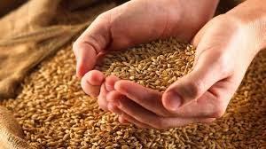 Оборудование для первичной переработки зерновых | Усадьба фермера