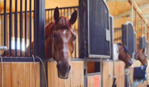 Содержание лошадей в конюшне