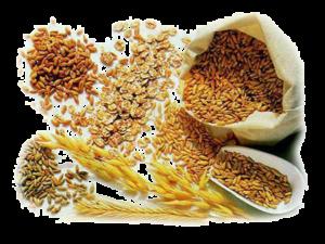 Способы переработки зерна   Усадьба фермера