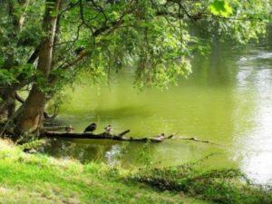 Что можно выращивать на арендованном пруду?   Усадьба фермера