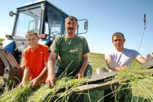 Что нужно знать начинающему фермеру?   Усадьба фермера
