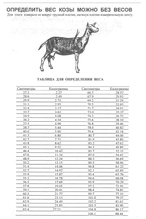 Вес козы без весов