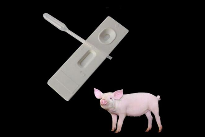 Тест на беременность для свиней