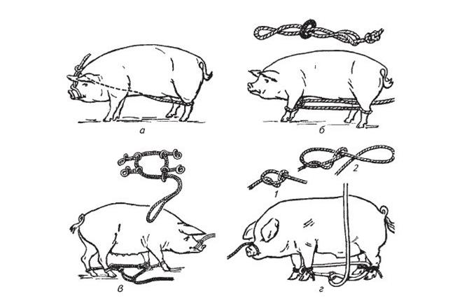 Как связать свинью