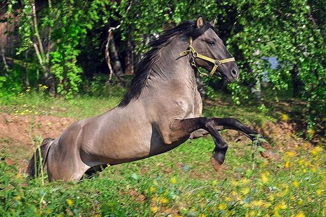 Вятская лошадь - описание