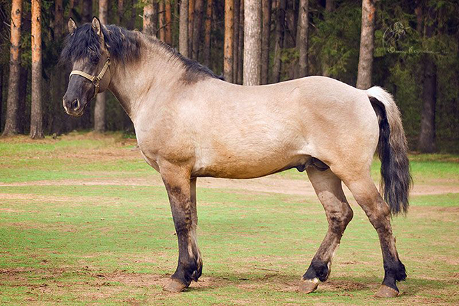 Параметры вятских лошадей