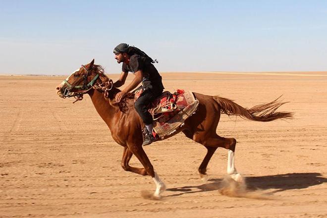 Приручение арабских лошадей