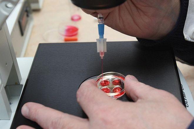 Трансплантация эмбрионов