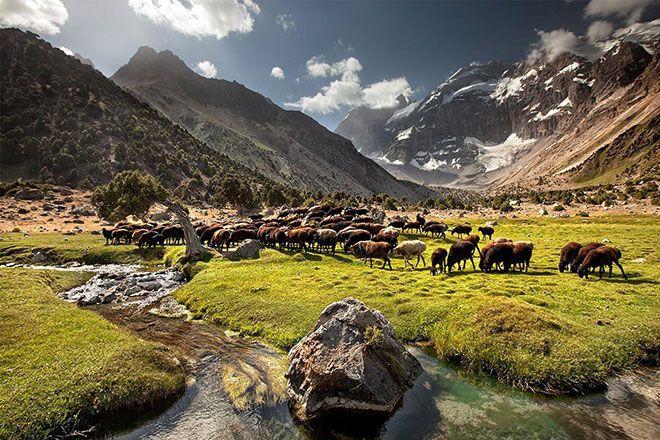 Гиссарские овцы в горах