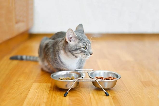 Какой корм для стерилизованных кошек лучше