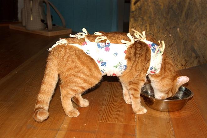 Кот после стерилизации
