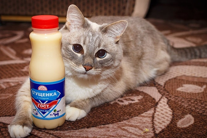 Кошка и сгущенка