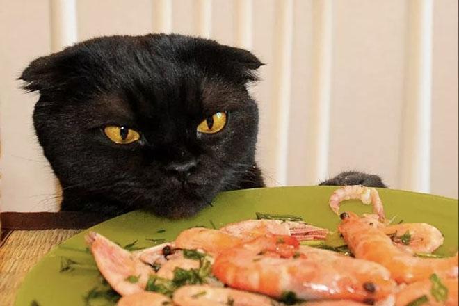 Кошка смотрит на креветки