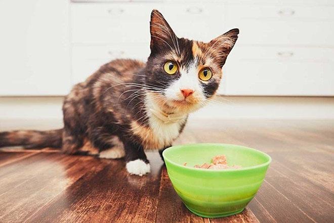 Кошка возле миски