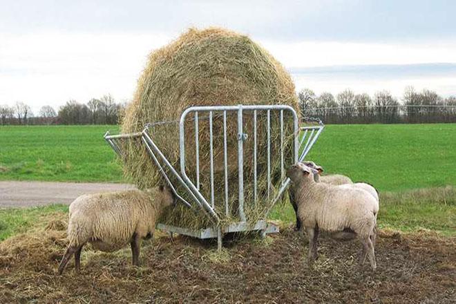 Овцы едят сено